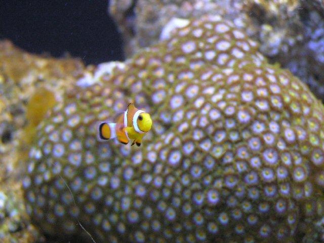 coral5-jpg
