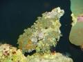 coral-polyps-2