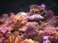 coral12-jpg