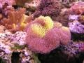 coral14-jpg