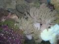 coral3b-jpg