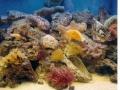 coral4-jpg