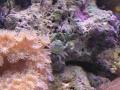 coral7-jpg