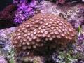 coral8-jpg