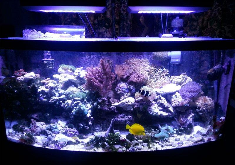 custom-aquarium