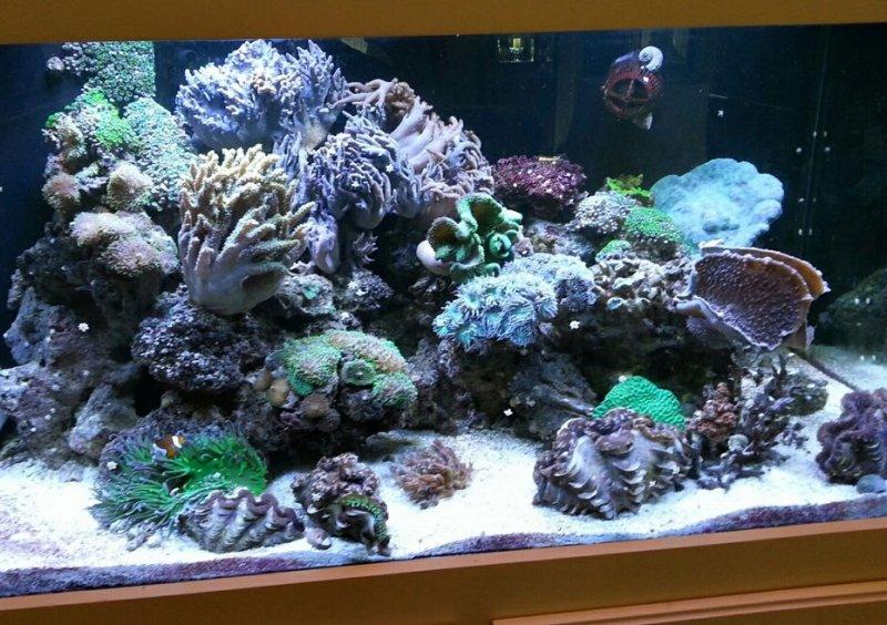 custom-reef-tank