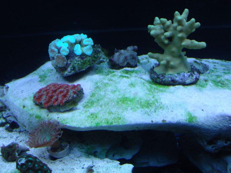 coral-frag-tank