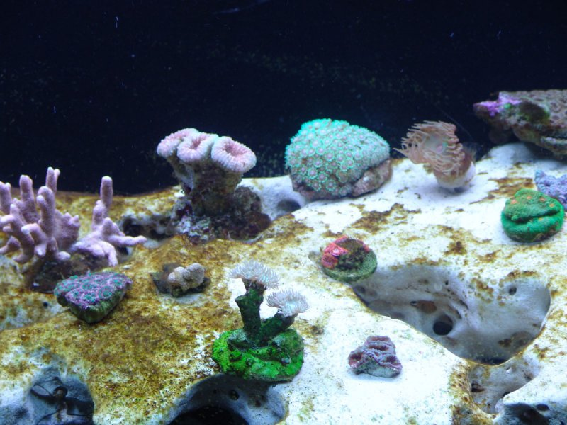 coral-frags-2