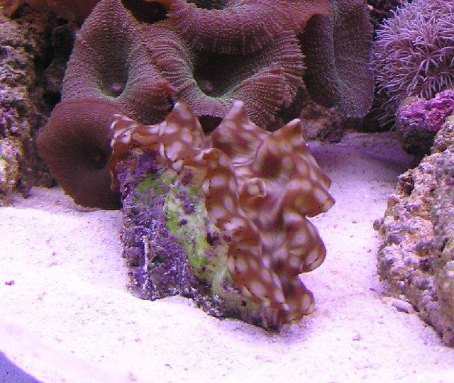 coral9-jpg