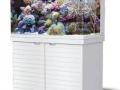 max250-aquarium