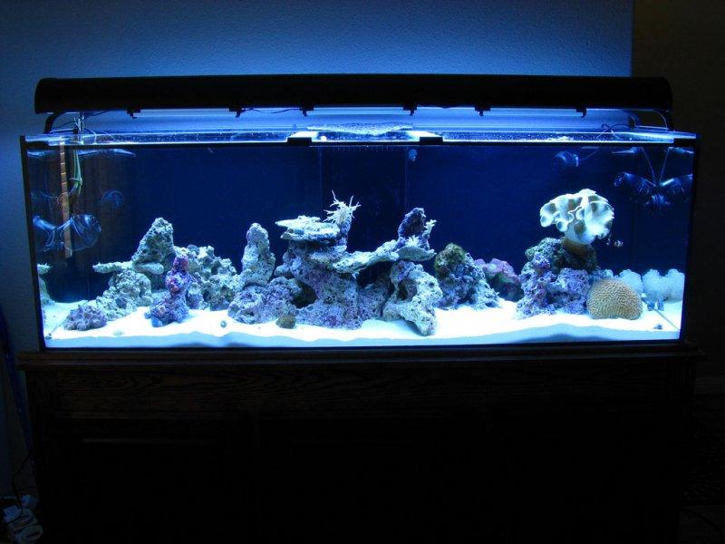 180g-starfire-aquarium
