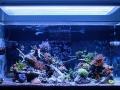 200g-starfire-aquarium