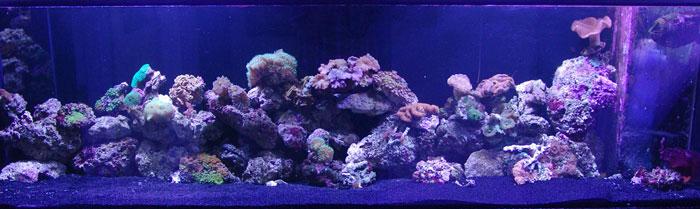 coral-tank-sm
