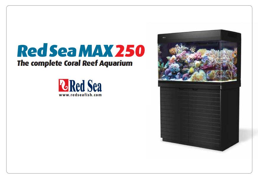 red-sea-max